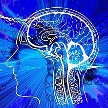 Les bienfaits du serpolet pour le cerveau