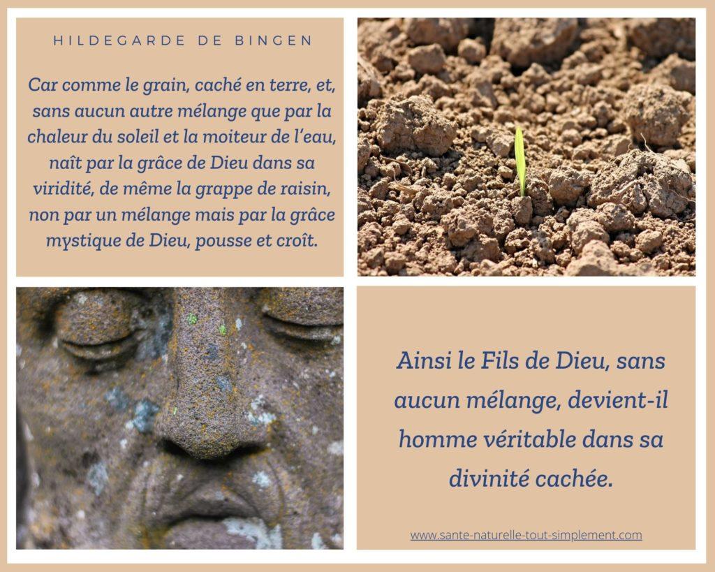 Citation d'Hildegarde de Bingen : comme le grain caché en terre