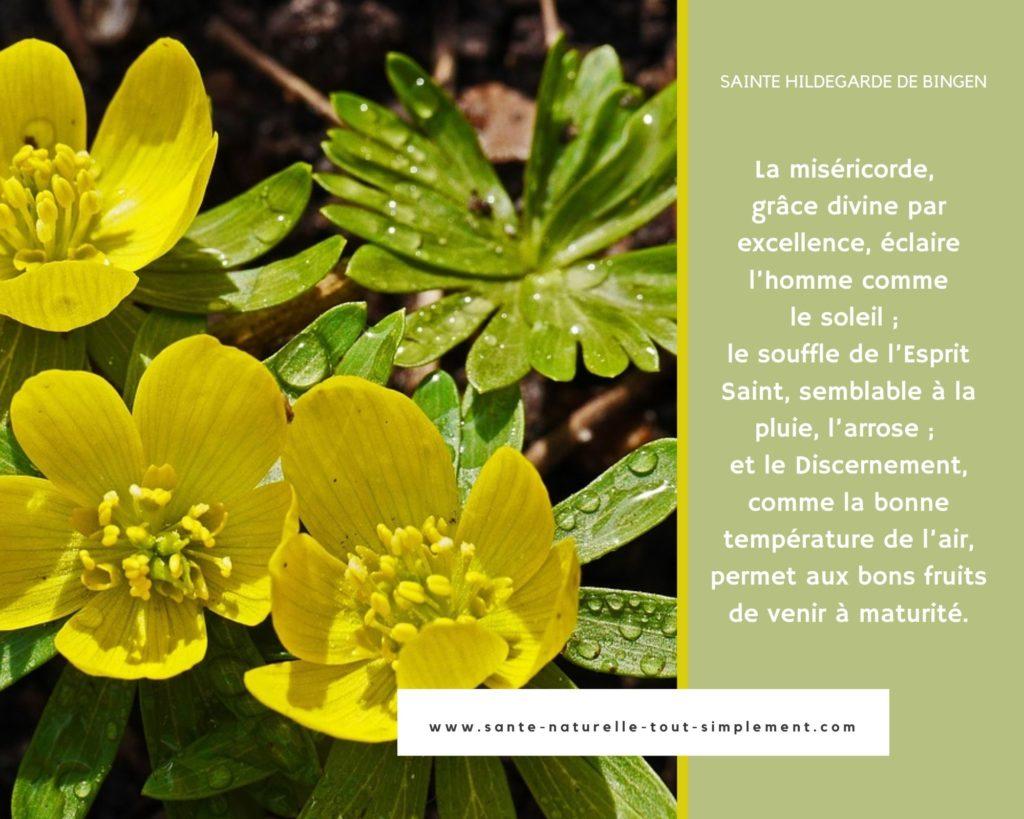 De bons fruits ; Citation d'Hildegarde de Bingen